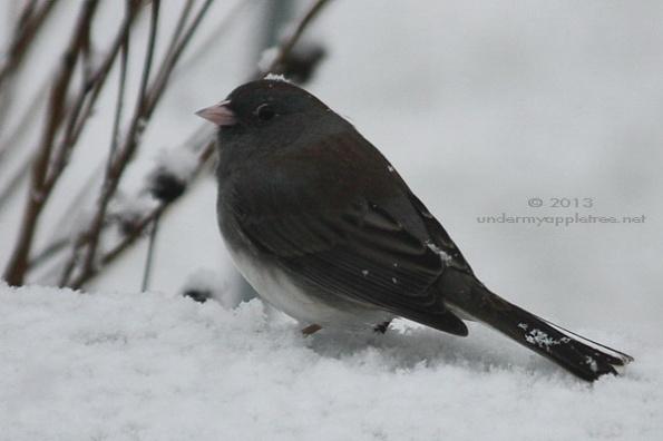 Weekend Birding: A Favorite Winter Visitor