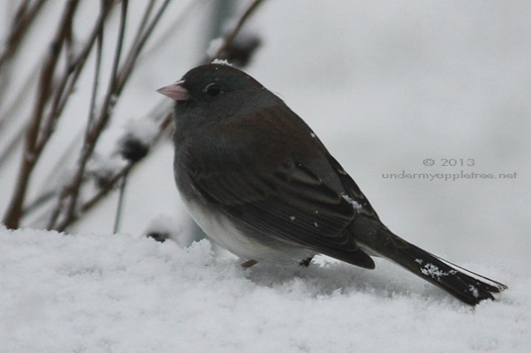 Weekend Birding: A Favorite Winter Visitor