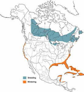 Palm Warbler Range Map from 'Birds of North America'