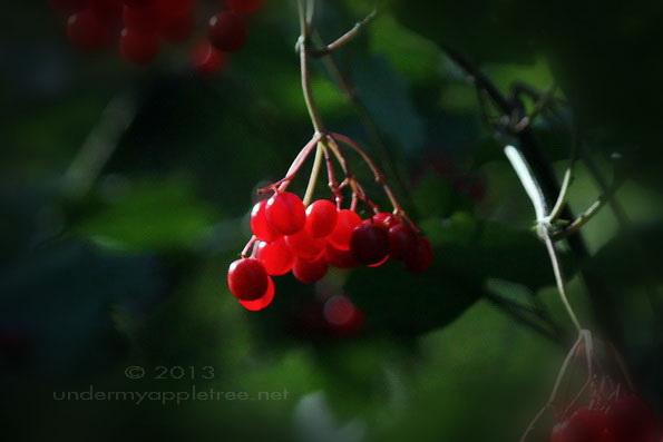 Berries-Vignette_IMG_9826