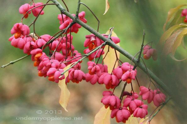 AutumnFlower_IMG_5503