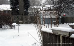 SnowyYard_IMG_1054