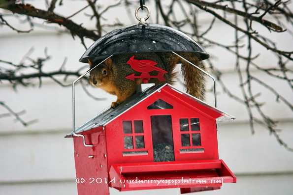 Squirrel_Feeder-sml_IMG_0776