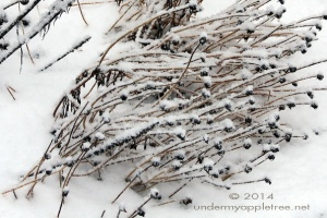 WinterGarden_IMG_0619