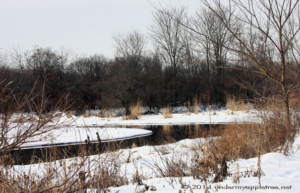 DuPage River - Churchill Woods_IMG_0599