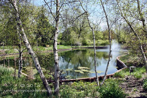 Spring_IMG_7238