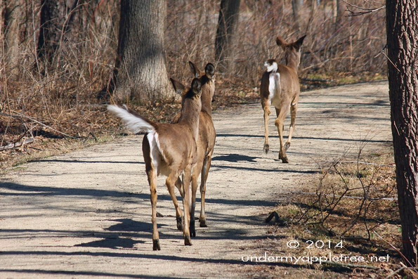ChurchillPrairieDeer_IMG_1118