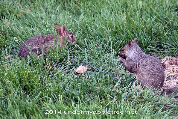 Bunny and Squirrel