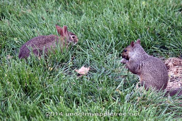 Bunny and Squirrel