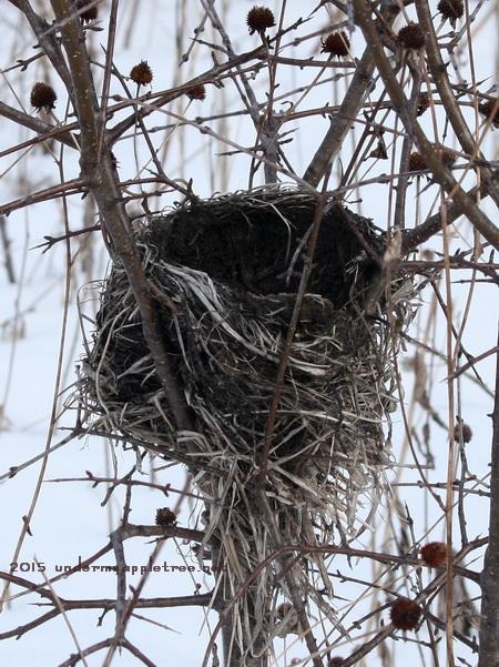 Nest_IMG_3786