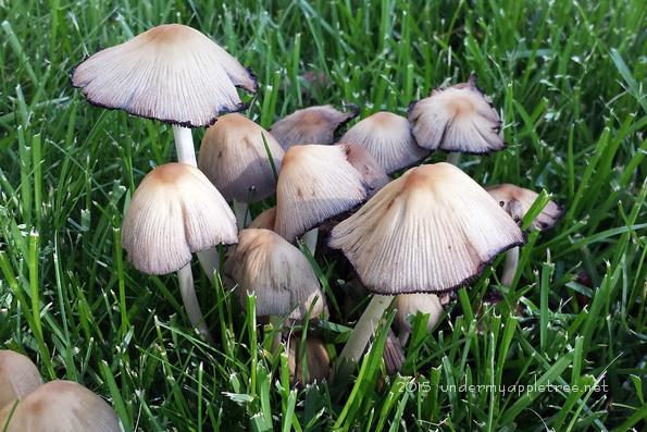 Mushrooms_171836
