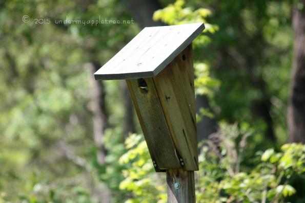 TreeSwallowNestbox_IMG_4257
