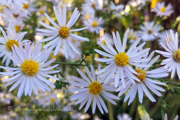 Aster-sml_20150926_164119