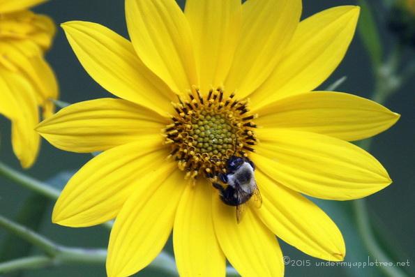 YellowFlower_IMG_4920