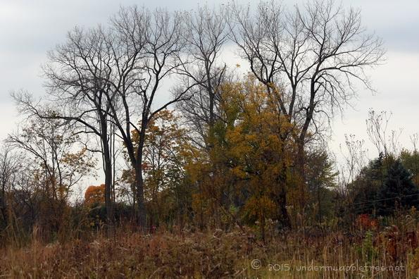 AutumnChruchill_IMG_5032