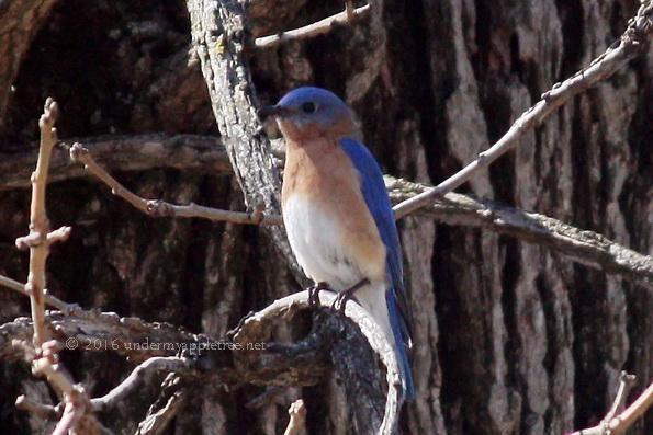 Bluebird-sml_IMG_4043