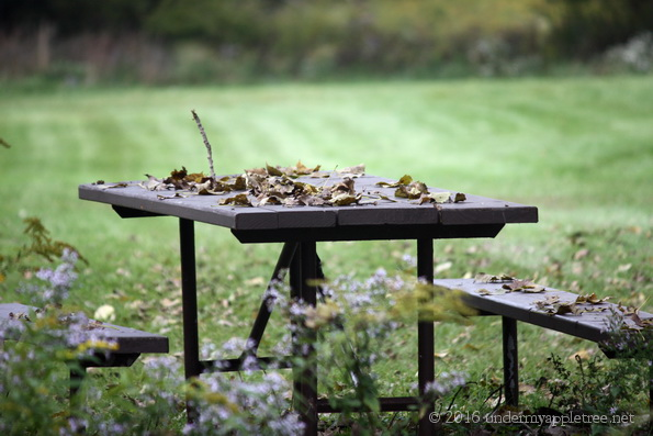 picnictable_chwoods_img_5669